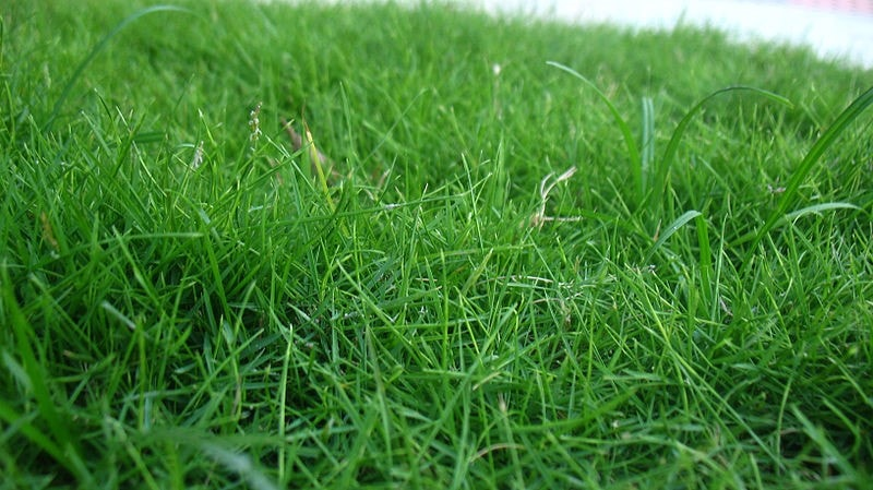 how-to-fertilize-your-lawn-2