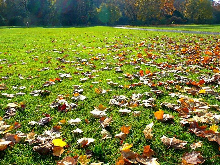 useful-tips-for-winter-lawn-care-3