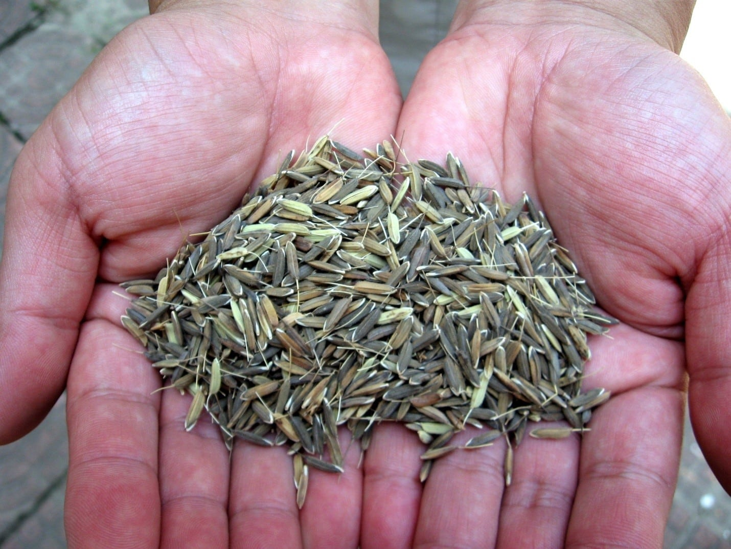 useful-tips-to-seed-your-lawn-1
