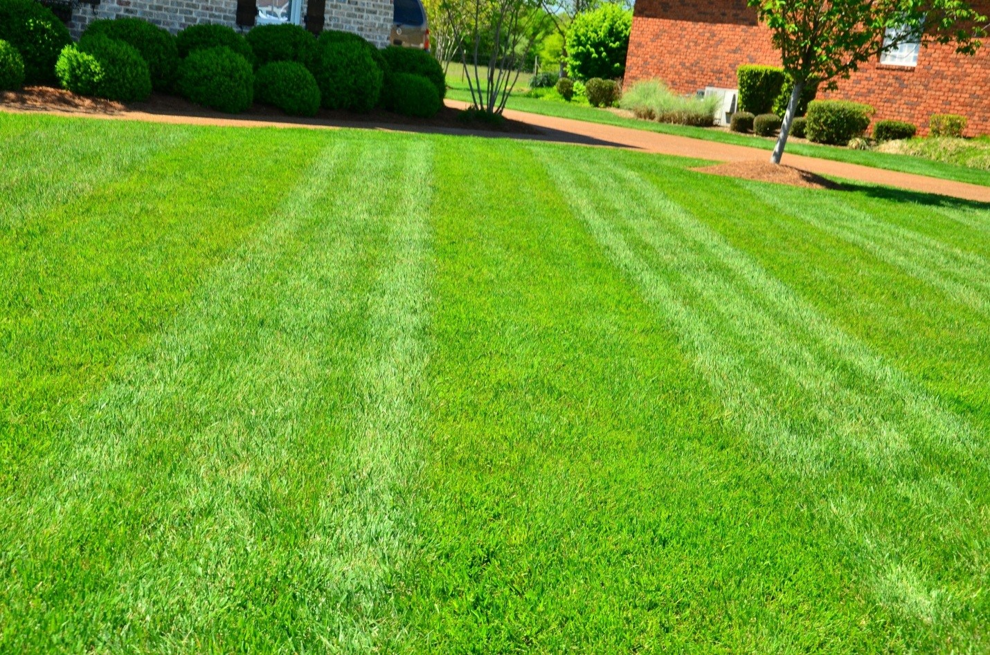 useful-tips-to-seed-your-lawn-5