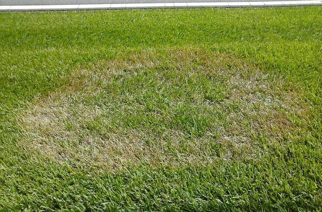 how-to-deal-with-summer-lawn-diseases-2