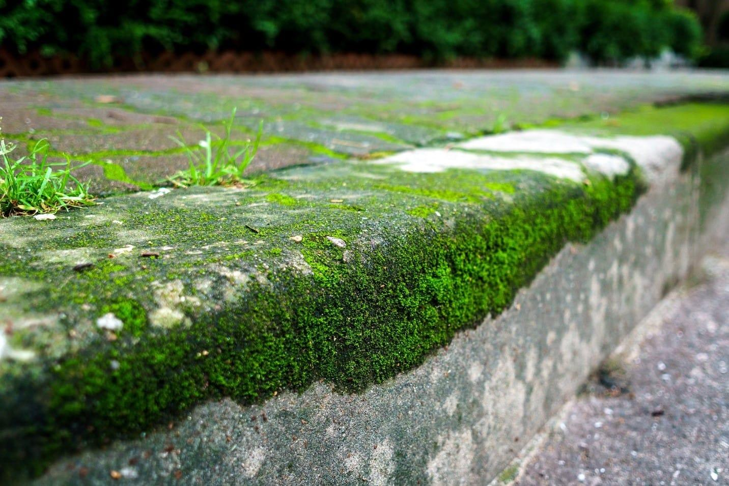 how-to-remove-moss-from-your-lawn-2