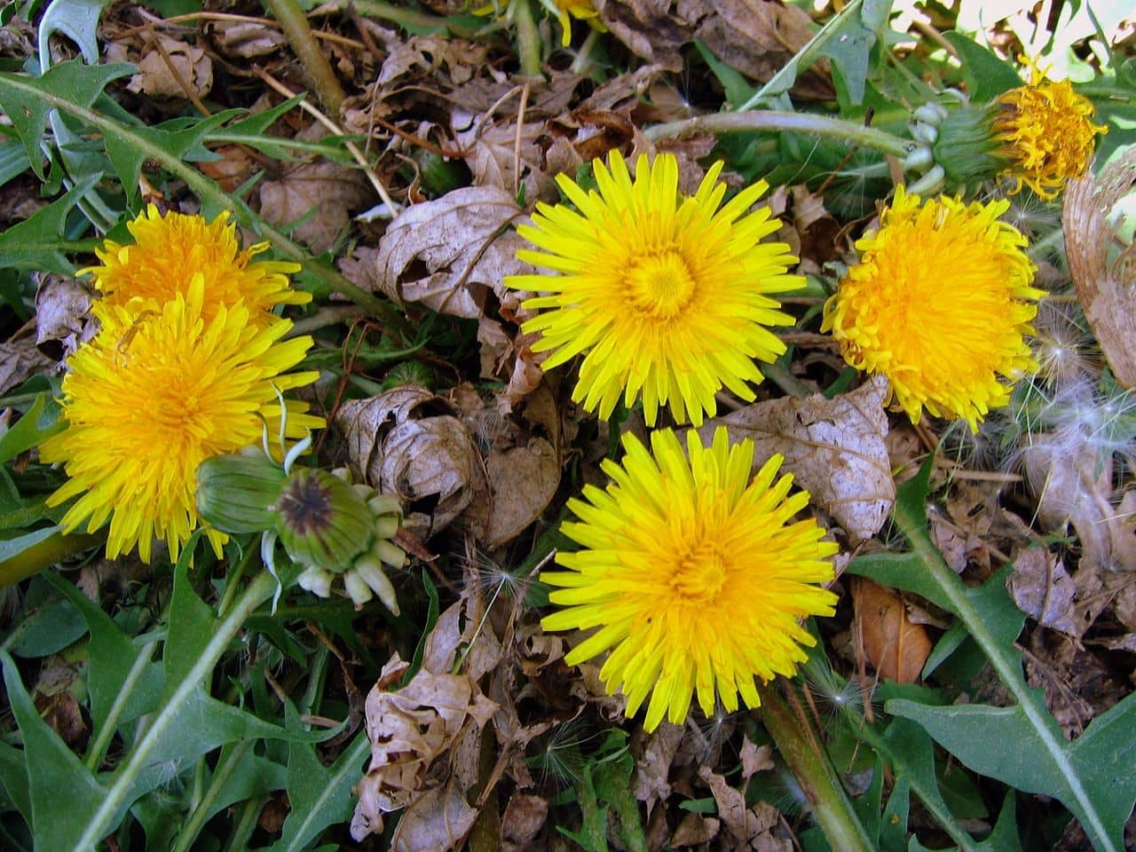 10-common-weeds-and-how-to-remove-them-2