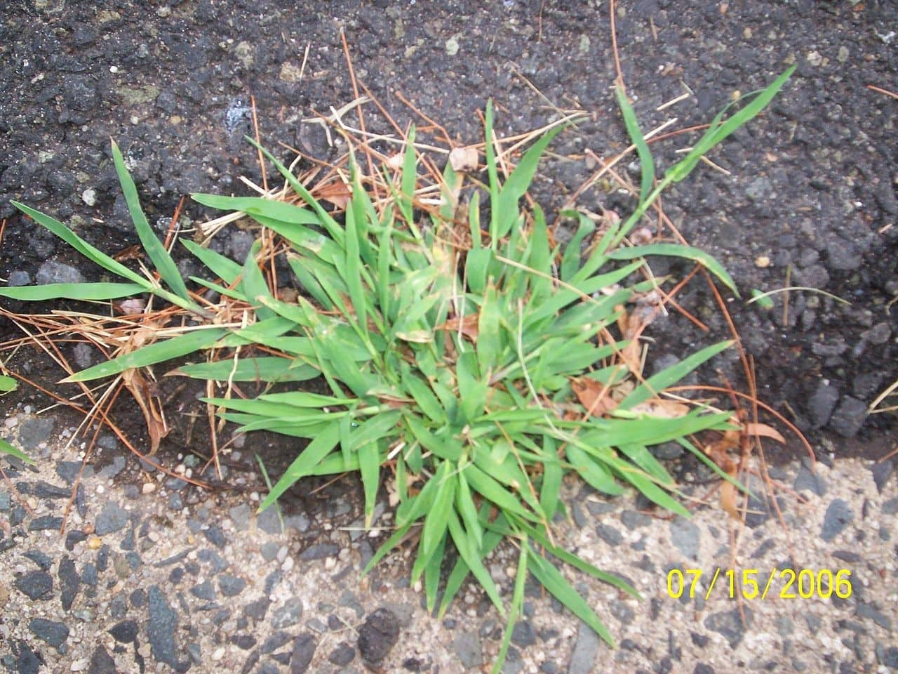 10-common-weeds-and-how-to-remove-them-4