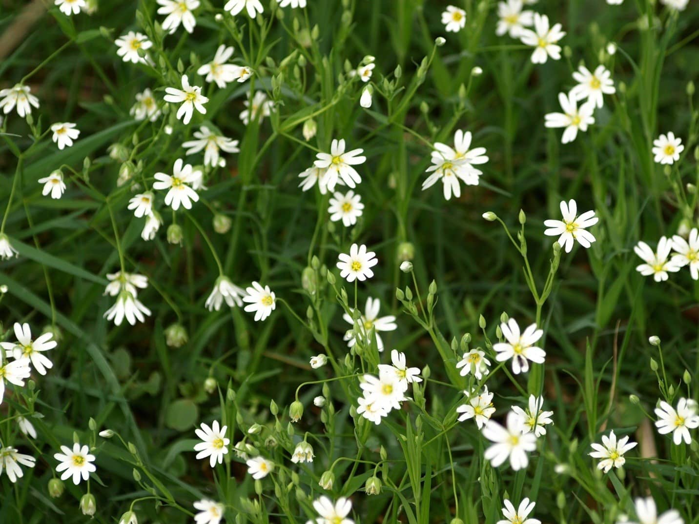10-common-weeds-and-how-to-remove-them-6