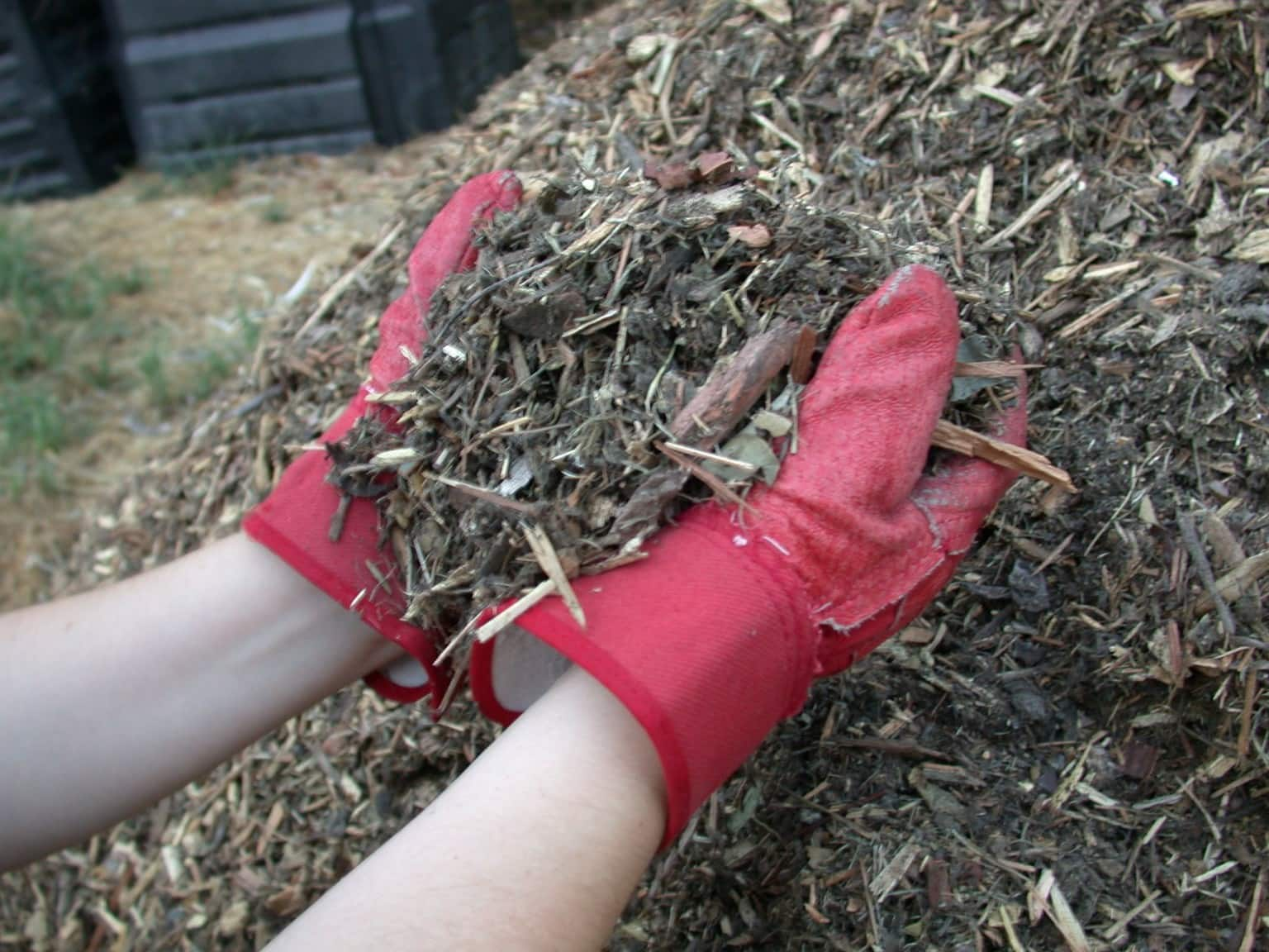 how-to-prevent-weeds-from-invading-your-lawn-2