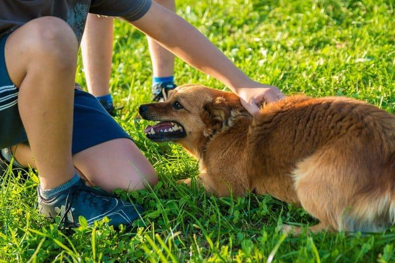 5-Easy-Steps-to-Maintain-the-Perfect-Lawn-with-a-Dog-1