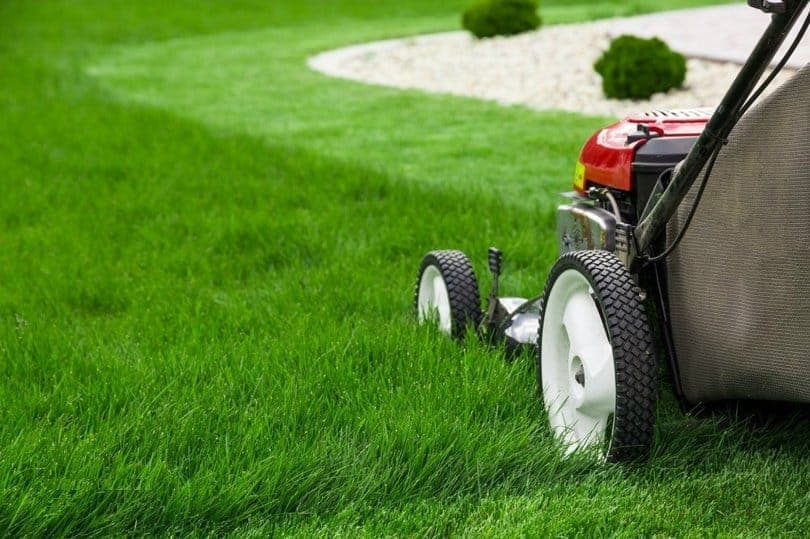 How-To-Mow-Your-Lawn-In-Hot-Weather-2