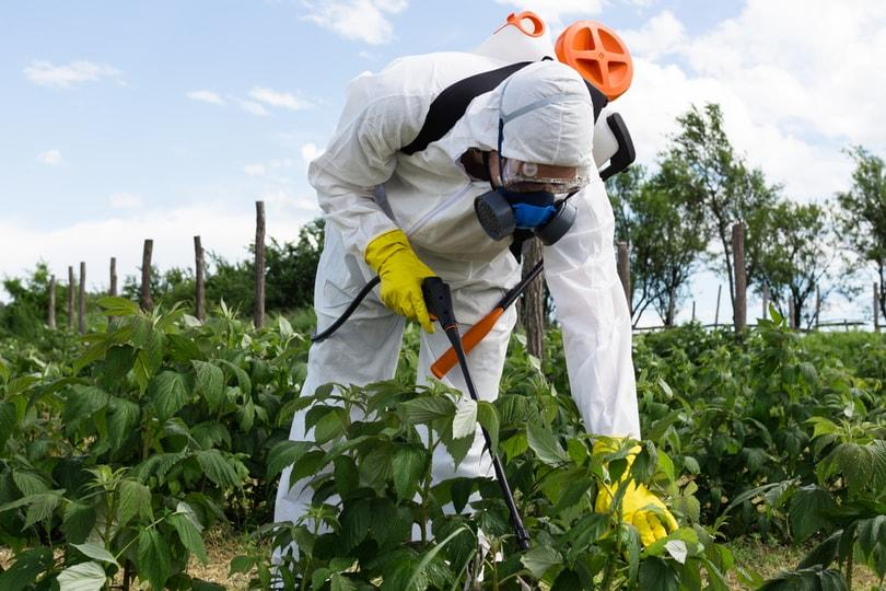 Picture of a man spraying pesticides in the crops to kill the animals