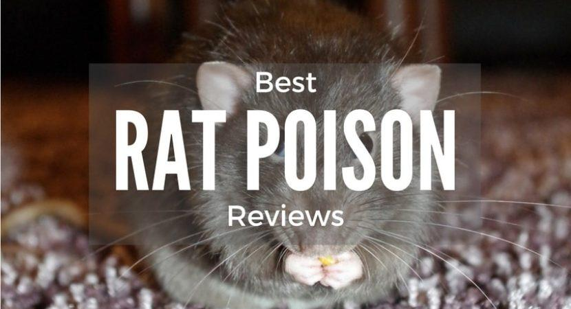 best-rat-and-mouse-poison-reviews-1