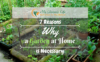 7-Reasons-Why-a-Garden-at-Home-is-Necessary-1