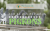 How-to-get-rid-of-pigeons-1