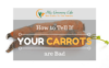 How-to-tell-if-your-carrots-are-bad-1