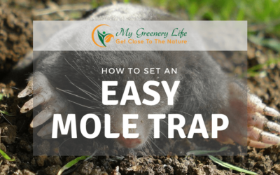 how-to-set-an-easy-mole-trap-1