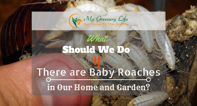 what-should-we-do-if-there-are-baby-roaches-in-our-home-and-garden-1