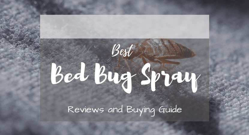 best-bed-bug-spray-reviews-1