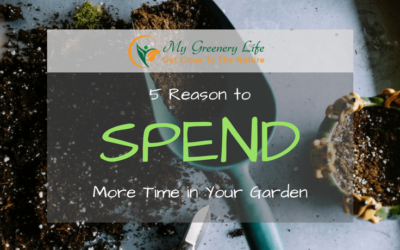 5-reasons-to-spend-more-time-in-garden-1