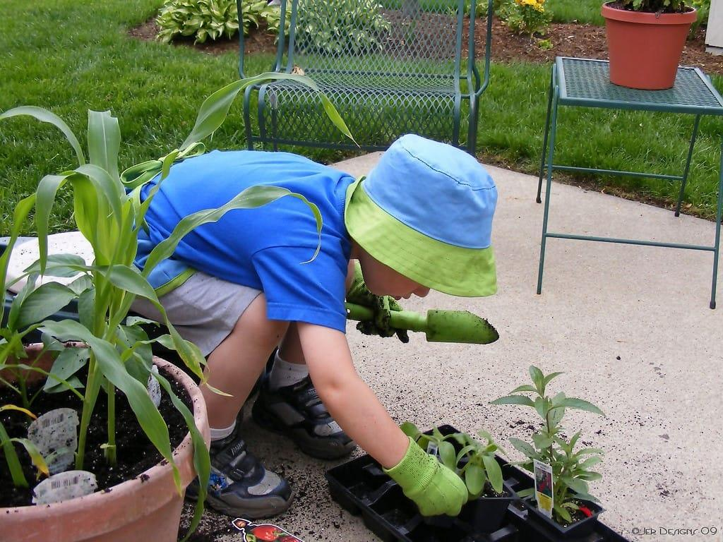 how-to-avoid-summer-lawn-stress-4