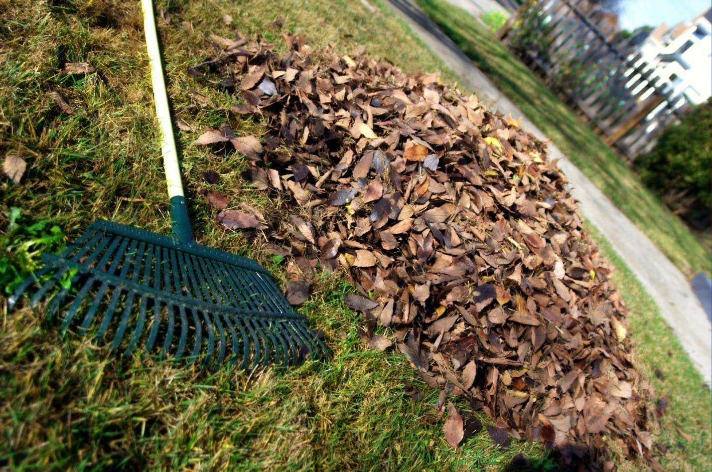 how-to-reseed-lawn-2