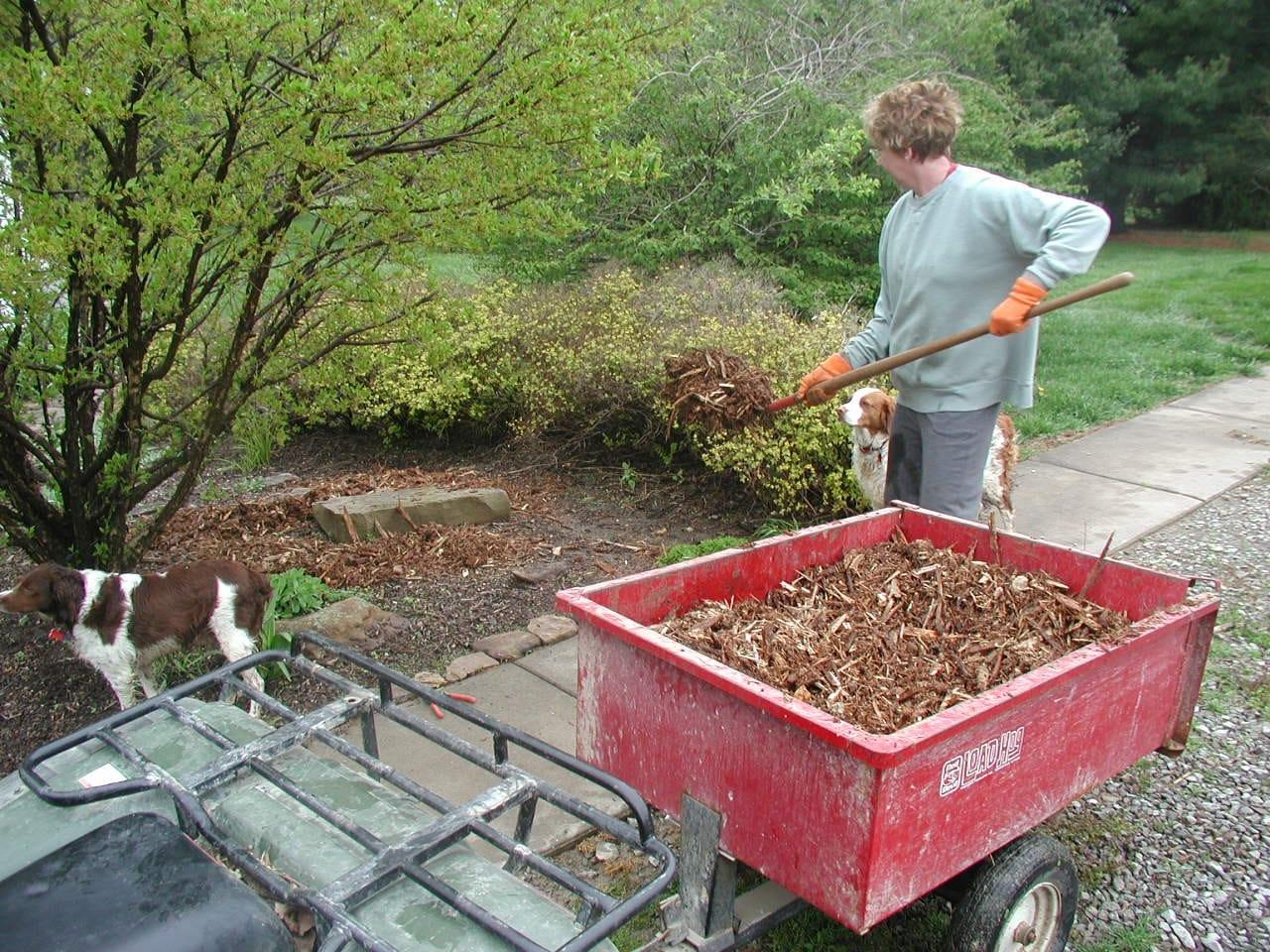 how-to-reseed-lawn-3