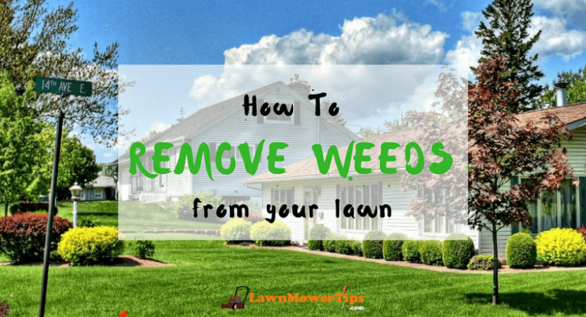 how-to-remove-weeds-from-your-lawn-1