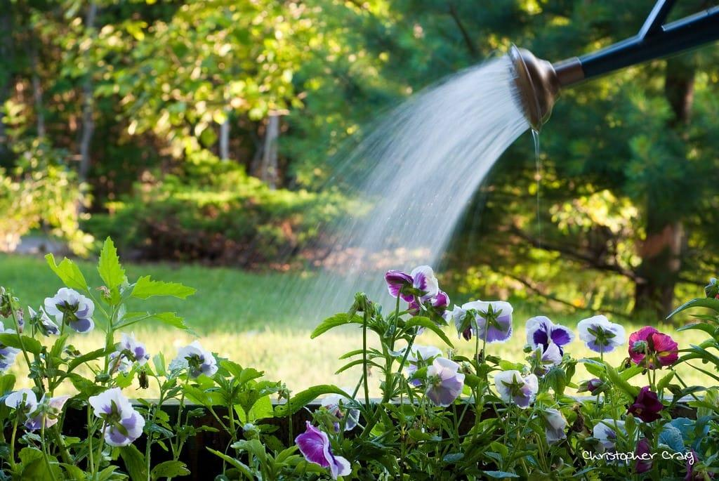 How-to-conserve-water-in-your-lawn-1