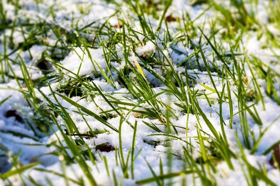 How-to-seed-a-dormant-lawn-in-winter-2