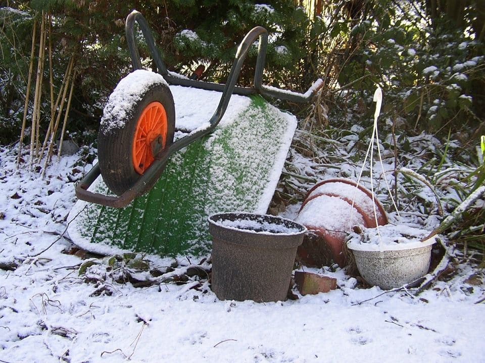 How-to-seed-a-dormant-lawn-in-winter-3