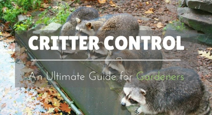 Critter-Control