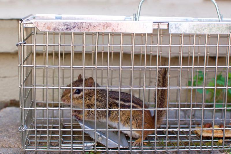 How-to-Get-Rid-of-Ground-Squirrels-3