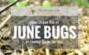 How-to-Get-Rid-of-June-Bugs-1