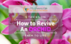 How-to-revive-an-orchid-back-to-life-1