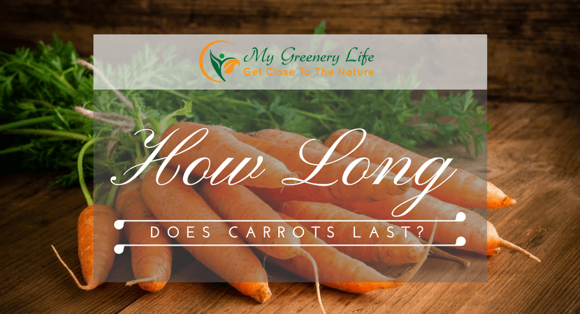 How-Long-Do-Carrots-Last-1