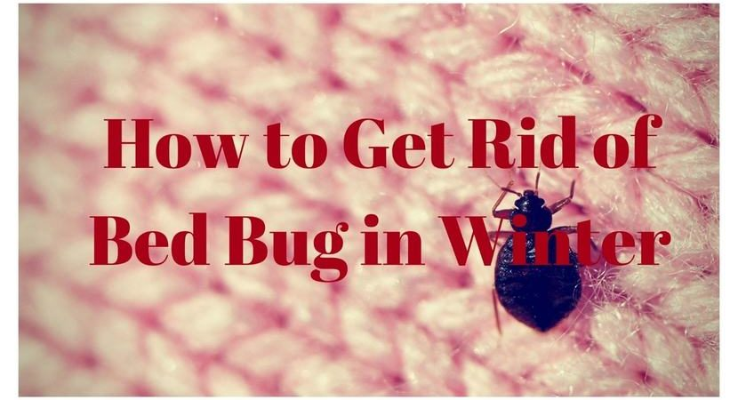 How-to-Get-Rid-of-Bed-Bug-in-Winter-1