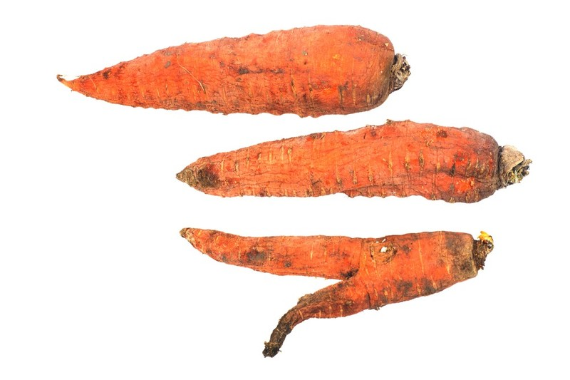 How-to-Tell-If-Your-Carrots-are-Bad-3
