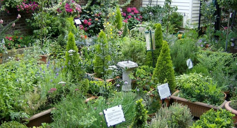 Create Your Own Healing Garden and Grow Your Own Medicinal Herbs ...