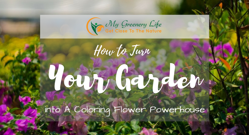 how-to-turn-garden-into-a-coloring-flower-powerhouse-1