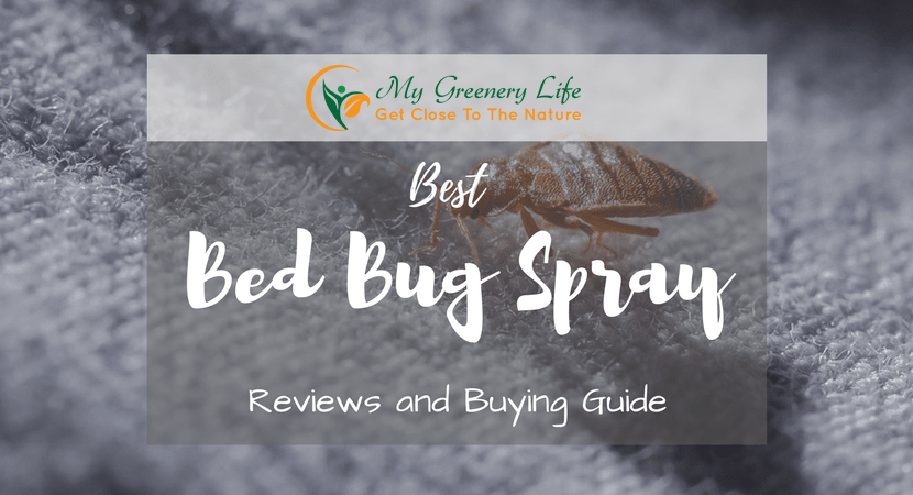 best-bed-bug-spray-reviews