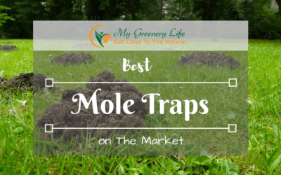 best-mole-trap-reviews-1