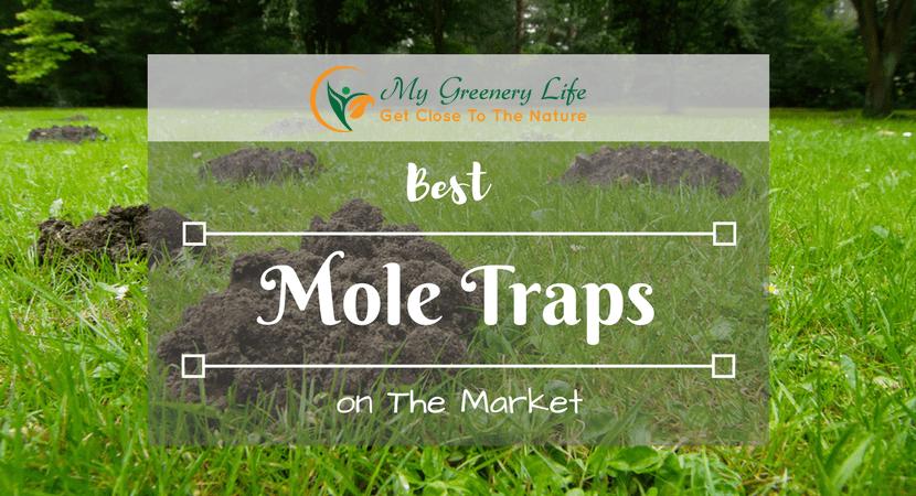 best-mole-trap-reviews-1