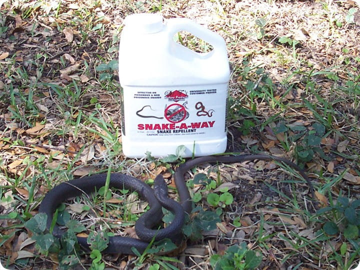 top-5-best-snake-repellent-reviews