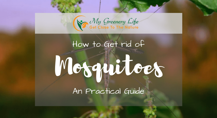 how-to-get-rid-of-moquitoes