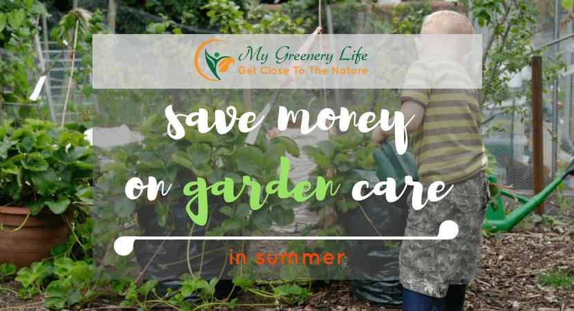 save-money-on-garden-care-in-summer-1