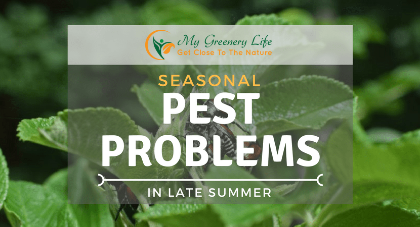 seasonal-pest-problems-in-late-summer
