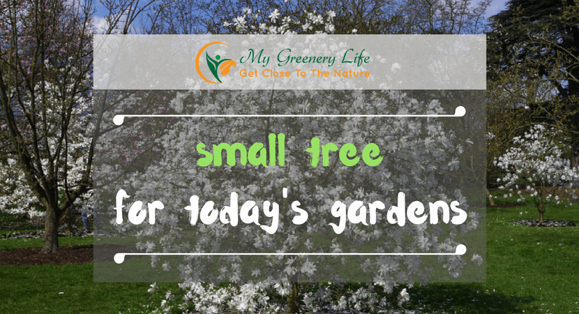 small-tree-for-today-gardens-1