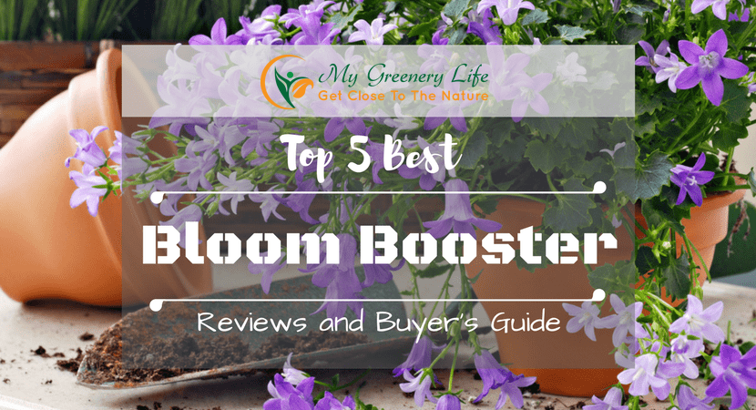 top-5-best-bloom-booster-reviews-1