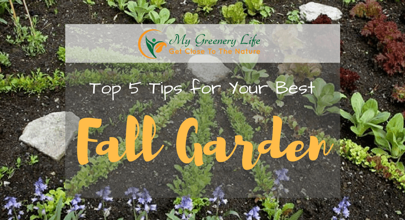 top-5-tips-for-your-best-fall-garden-1