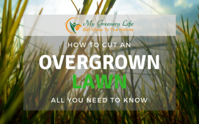 How-to-Cut-an-Overgrown-Lawn-1