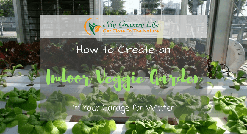 how-to-create-an-indoor-veggie-garden-1