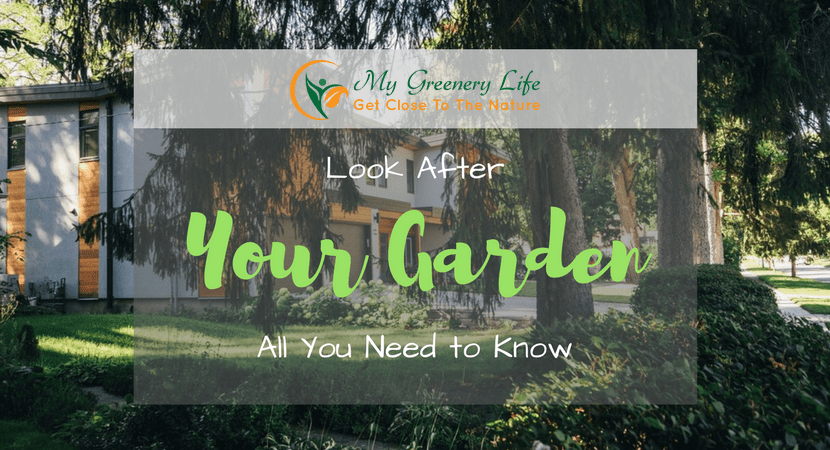 look-after-your-garden